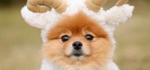 Собака 1