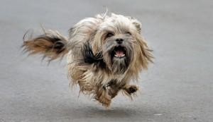 Собака 10
