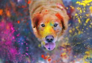 Собака 13