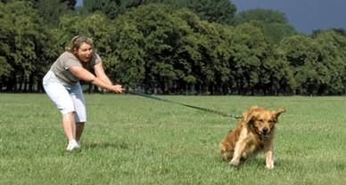 Hond-trekt-aan-de-lijn-e1306178960214
