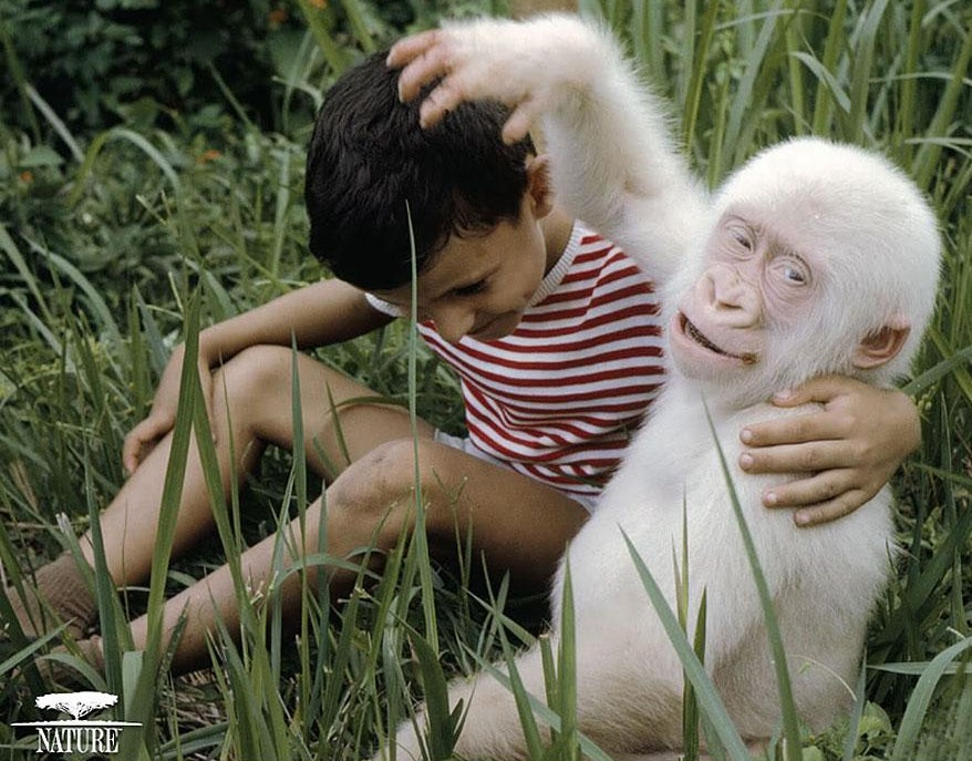 albino-animals-12