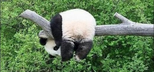 funny-bears-10