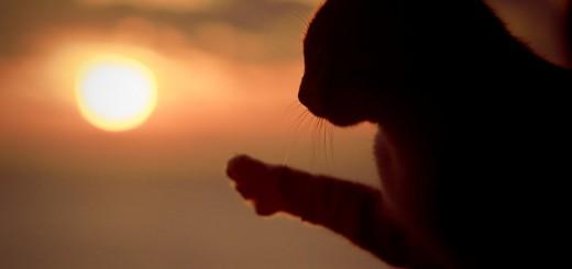 konstantin-egorov-cat-scratching-sun