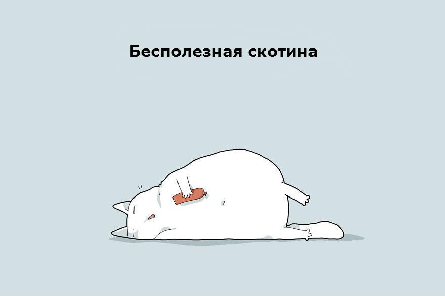 cattypes-011__880_1