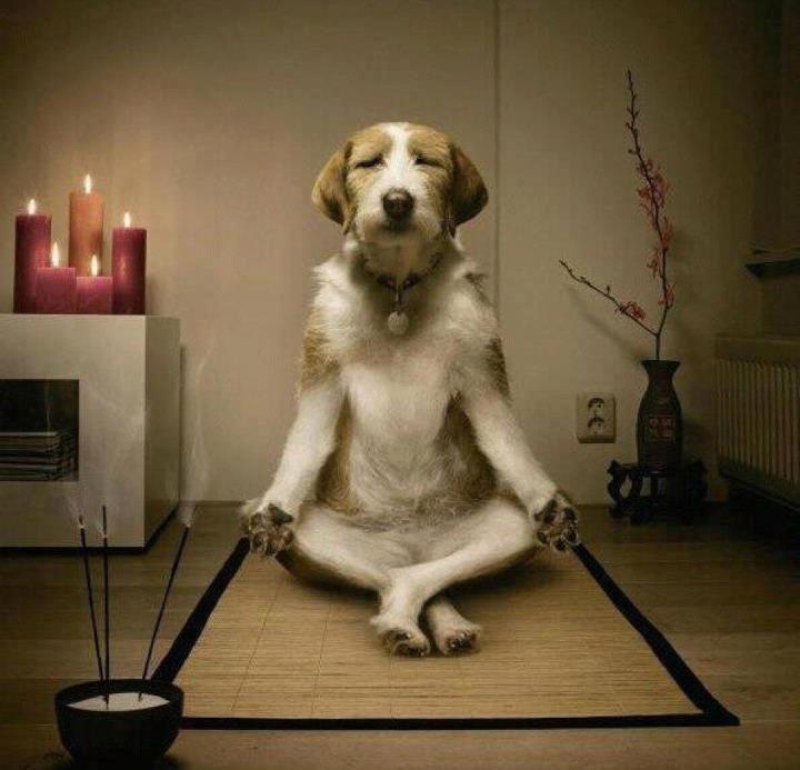Meditace (1)