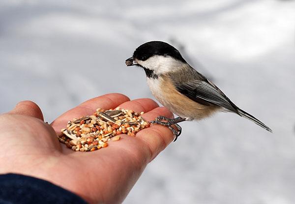 feeding-a-bird