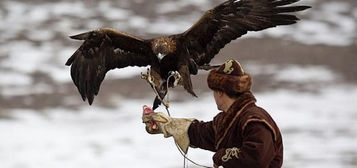 hunting-with-birds-in-kazakhstan