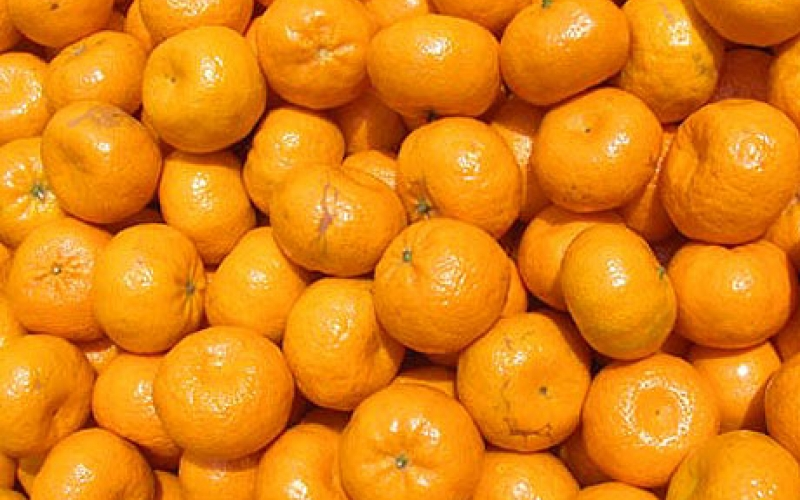 mandariny-optom
