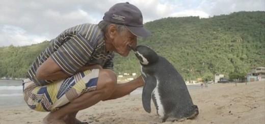 pingvin-01