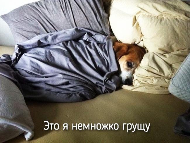 r2_fototelegraf.ru_eto-ya-14_56a01857
