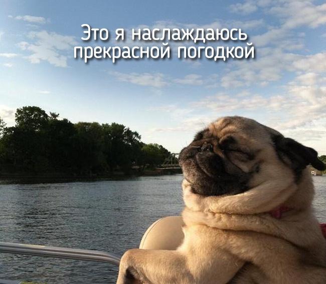 r2_fototelegraf.ru_eto-ya-15_4e798285