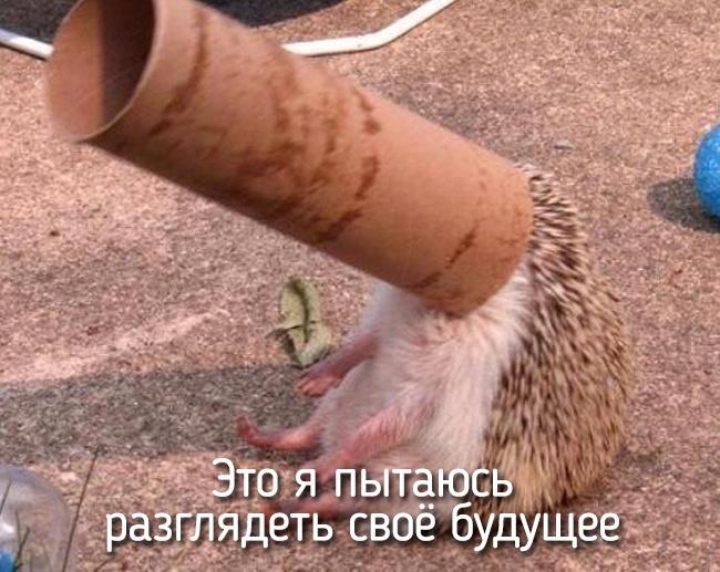 r2_fototelegraf.ru_eto-ya-18_946e57a7