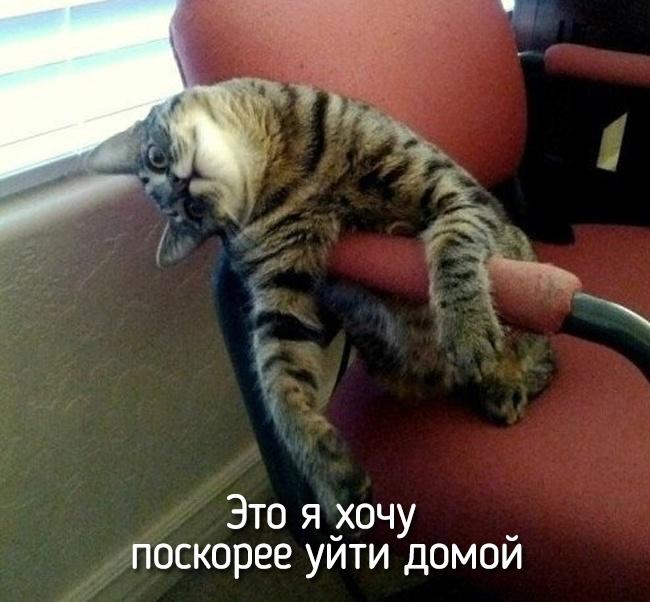r2_fototelegraf.ru_eto-ya-19_8613c0f1