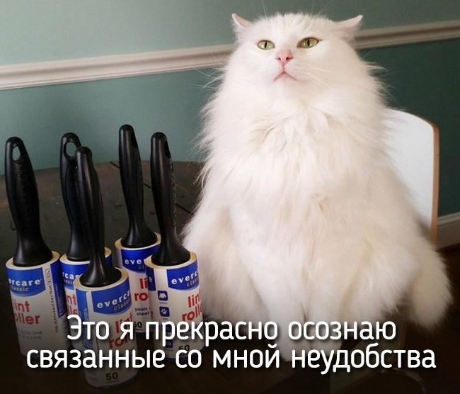r2_fototelegraf.ru_eto-ya-3_b6d3d63e