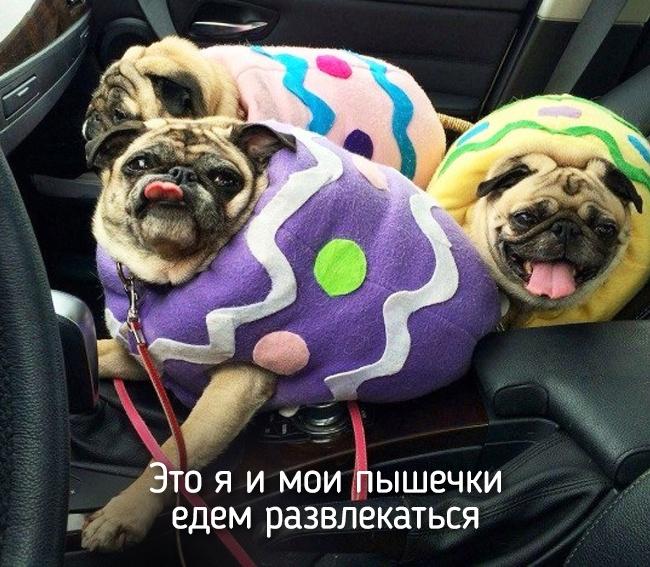 r2_fototelegraf.ru_eto-ya-4_e921957a