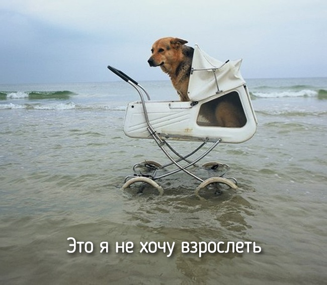 r2_fototelegraf.ru_eto-ya-6_c0932134