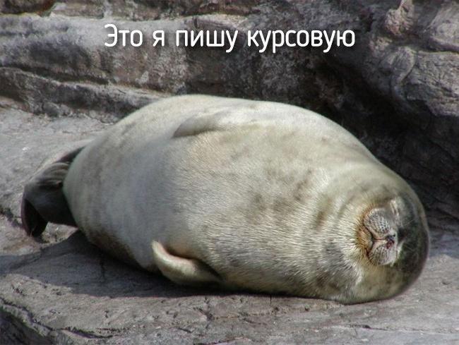 r2_fototelegraf.ru_eto-ya-7_7ebd659