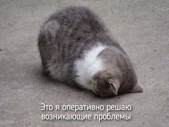 r2_fototelegraf.ru_eto-ya-8_5a0d372b