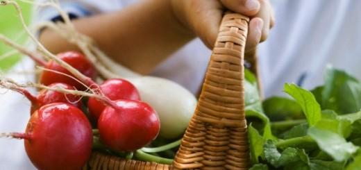 Child holding a basket of red and white radishes
