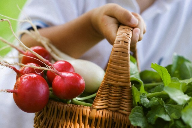 13 Dec 2006 --- Child holding a basket of red and white radishes --- Image by © FoodPhotography Eising/the food passionates/Corbis