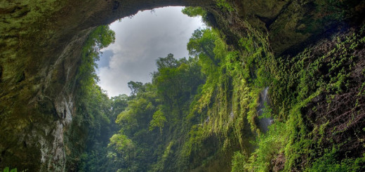 9-Буйство зелени внутри пещеры Шондонг, Вьетнам