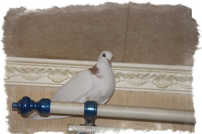 mini-golub-zaletel-v-okno-primeta
