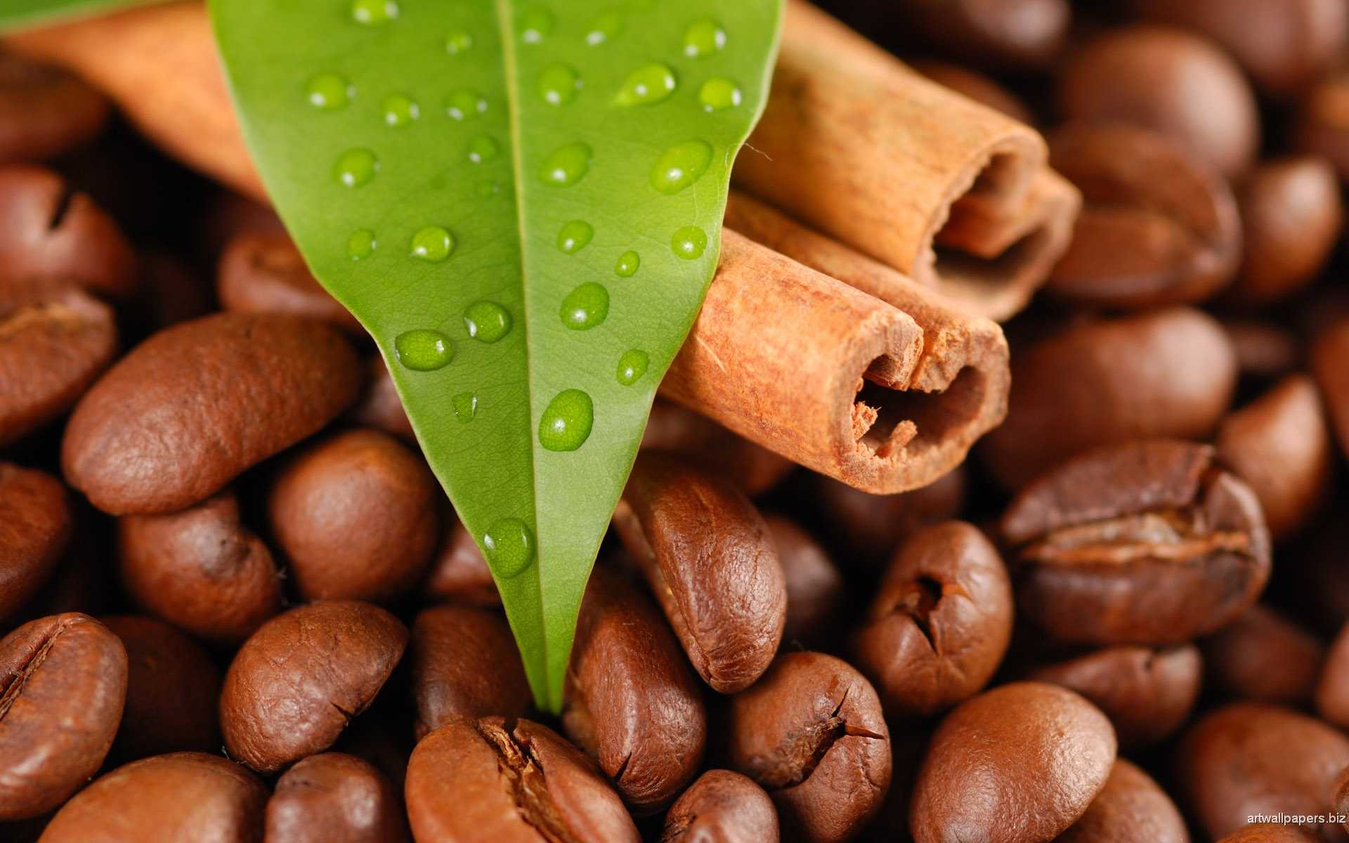 Coffee beans and cinnamon with leaves
