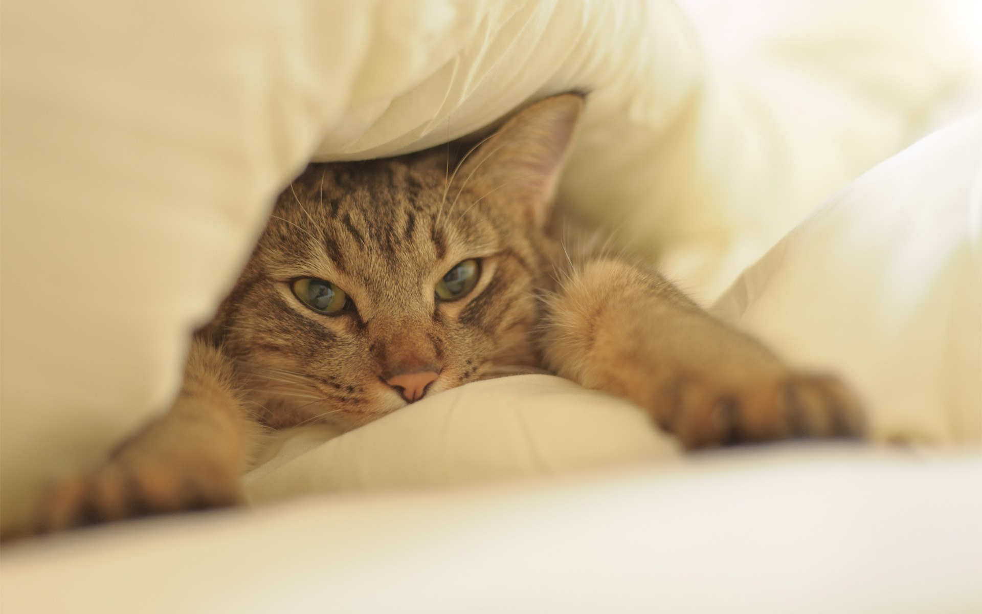 ___cat_in_bed_20150107_1965784513