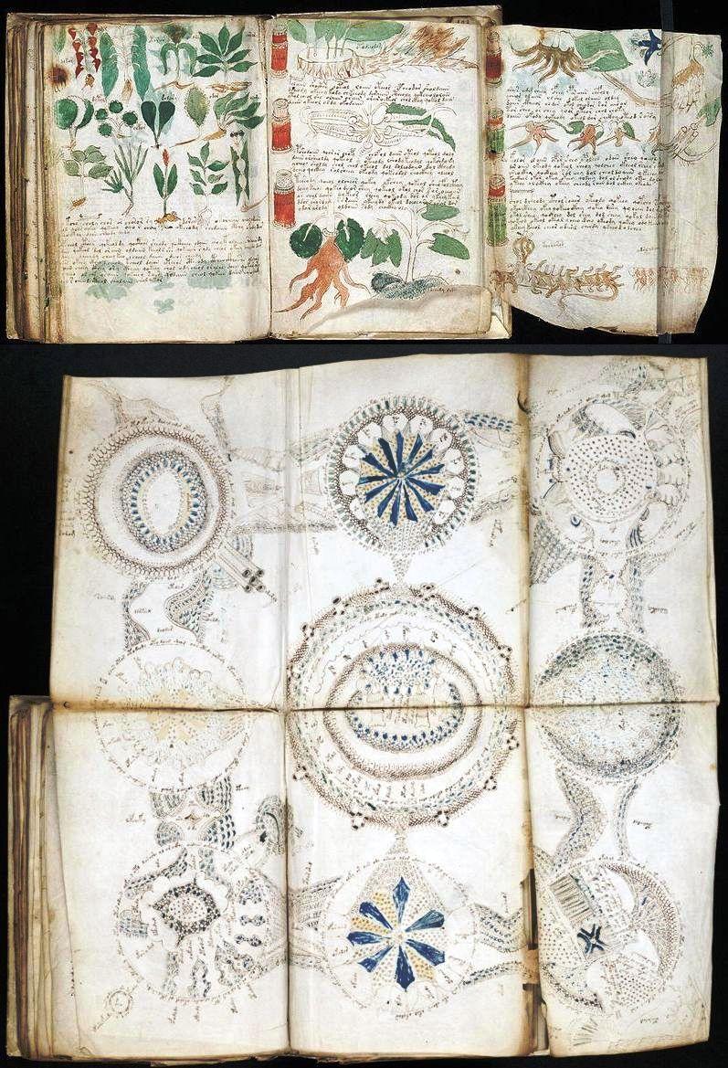 фрагмент рукописи Войнича