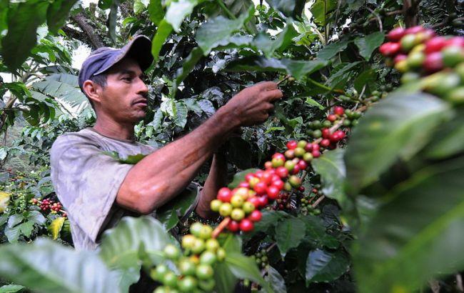columbia_coffee_650x410