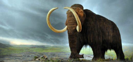 woolly_mammoth